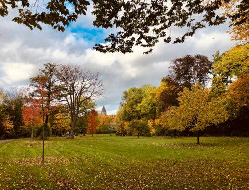 In Hildesheim den Herbst genießen