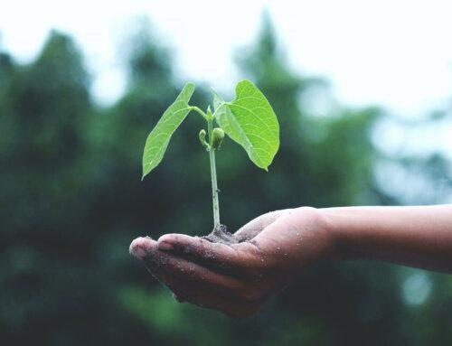 Nachhaltigkeit & Eierund: gute Freunde!