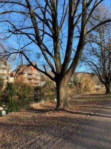 Hildesheimer Wallungen 2021