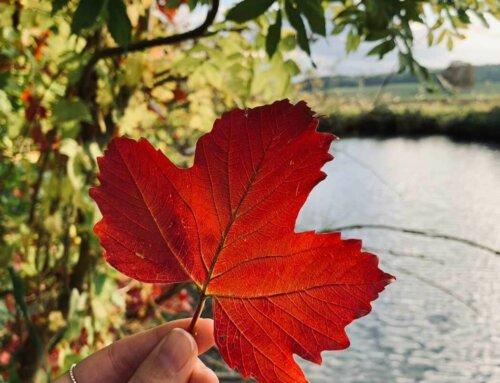 Herbstlich dekorieren – auf in die Hildesheimer Natur